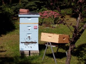 A healthy hive in the summer.